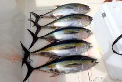 Tuna Fishing Mag Bay