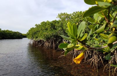 Fishing Mangroves in Mag Bay