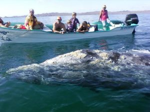 Mag Bay Whale Watching