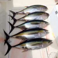 Tuna Fishing Mag Bay