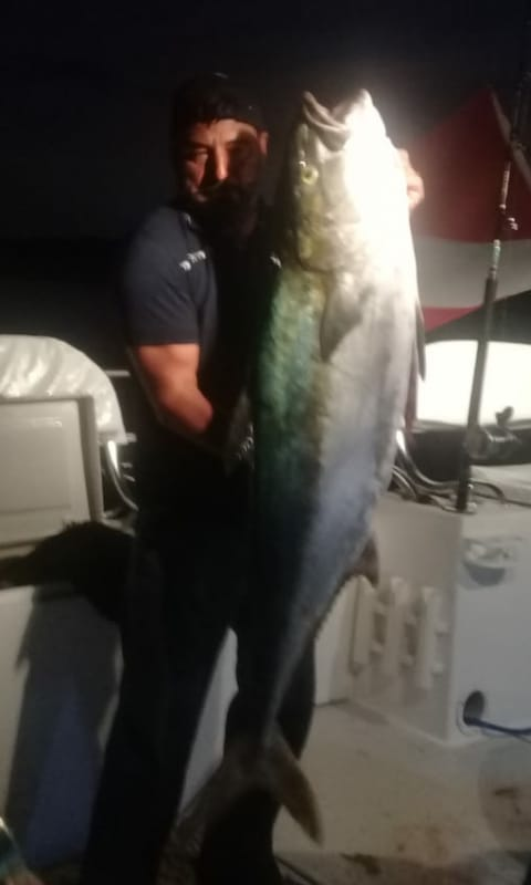 Big Yellowtail in Mag Bay