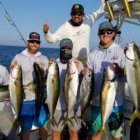A Bunch os small Mag Bay Yellowtail